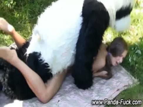 คนกับสัตว์ หมีแพนด้าเย็ดกับคน ควยอย่างใหญ่ไม่ใช่และนี้มันคนใส่ชุดหมีแพนด้ามาหลอกเย็ดหี